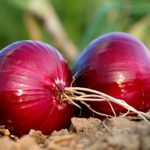 Allium Cepa (лук репчатый) в гомеопатии